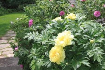 Flowers Along a Garden Path